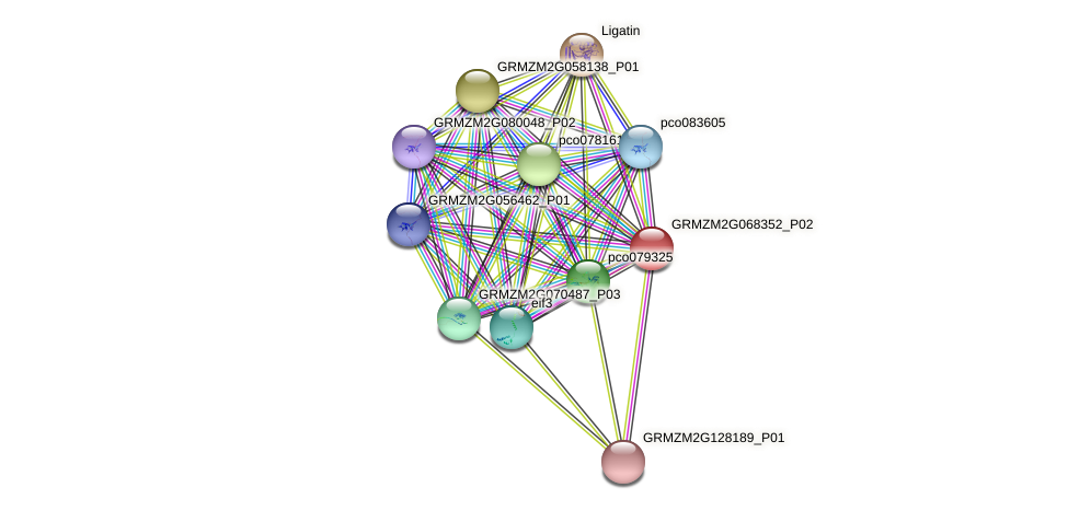 GRMZM2G068352_P02 protein (Zea mays) - STRING interaction network