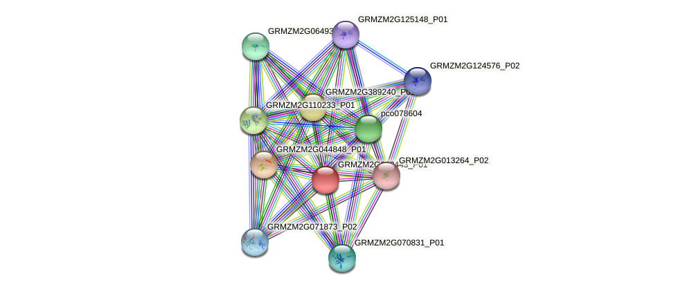 103644257 protein (Zea mays) - STRING interaction network