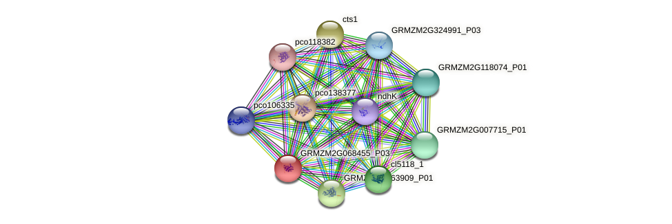 GRMZM2G068455_P01 protein (Zea mays) - STRING interaction network