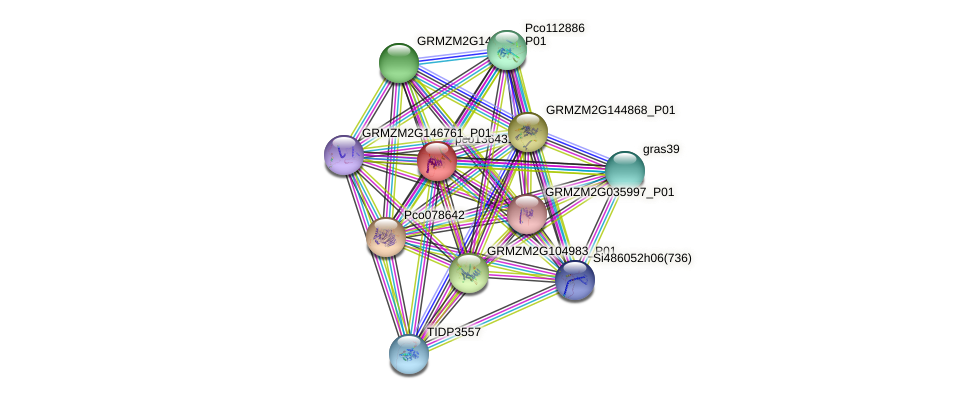 pco136431 protein (Zea mays) - STRING interaction network