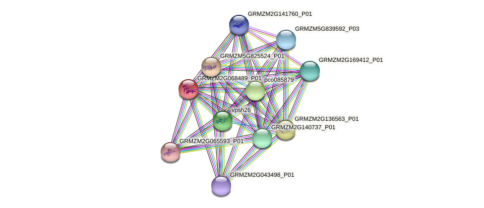 GRMZM2G068489_P01 protein (Zea mays) - STRING interaction network