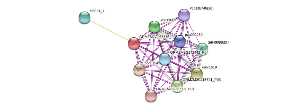 GRMZM2G068575_P01 protein (Zea mays) - STRING interaction network