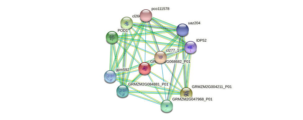 GRMZM2G068682_P01 protein (Zea mays) - STRING interaction network
