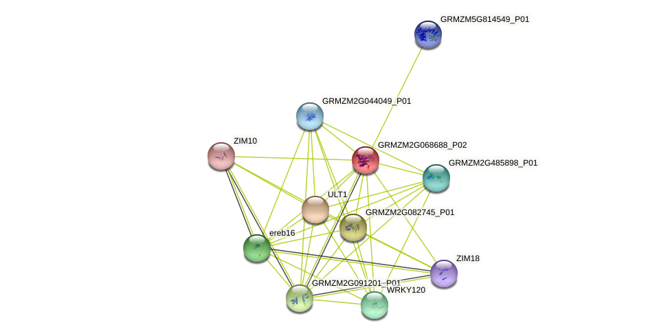 GRMZM2G068688_P02 protein (Zea mays) - STRING interaction network