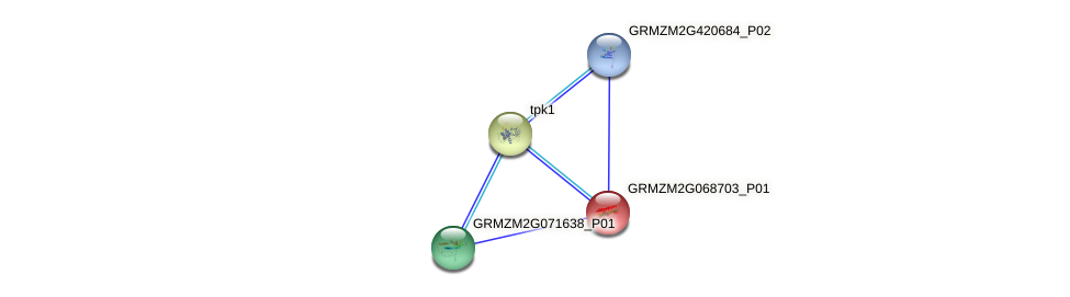 GRMZM2G068703_P01 protein (Zea mays) - STRING interaction network