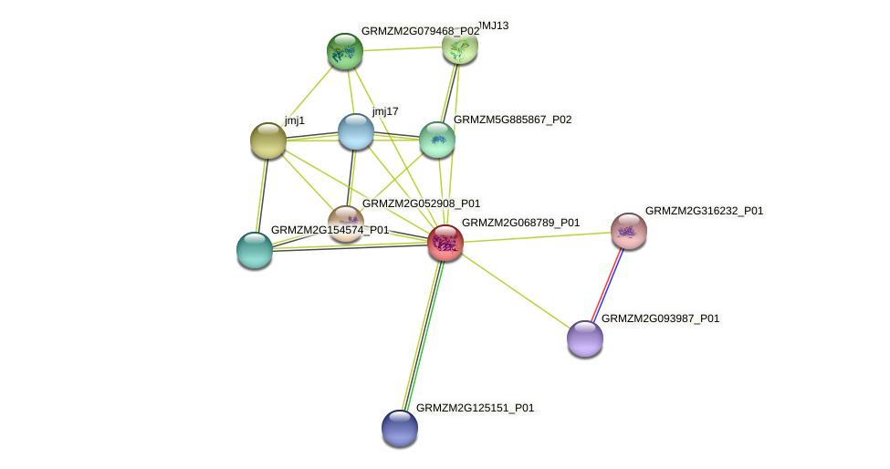 GRMZM2G068789_P01 protein (Zea mays) - STRING interaction network