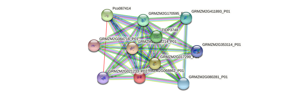 GRMZM2G068862_P01 protein (Zea mays) - STRING interaction network