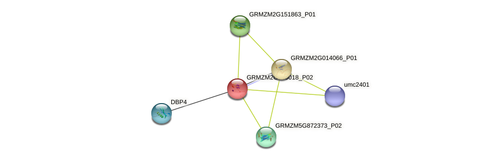 GRMZM2G069018_P02 protein (Zea mays) - STRING interaction network