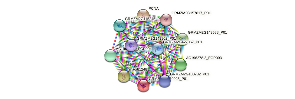 GRMZM2G069025_P01 protein (Zea mays) - STRING interaction network