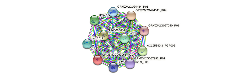 GRMZM2G069061_P01 protein (Zea mays) - STRING interaction network