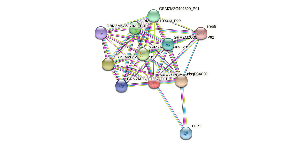 GRMZM2G069102_P01 protein (Zea mays) - STRING interaction network