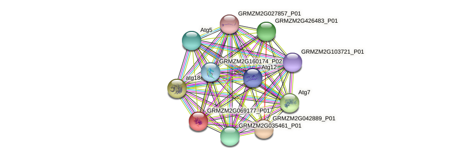 GRMZM2G069177_P01 protein (Zea mays) - STRING interaction network