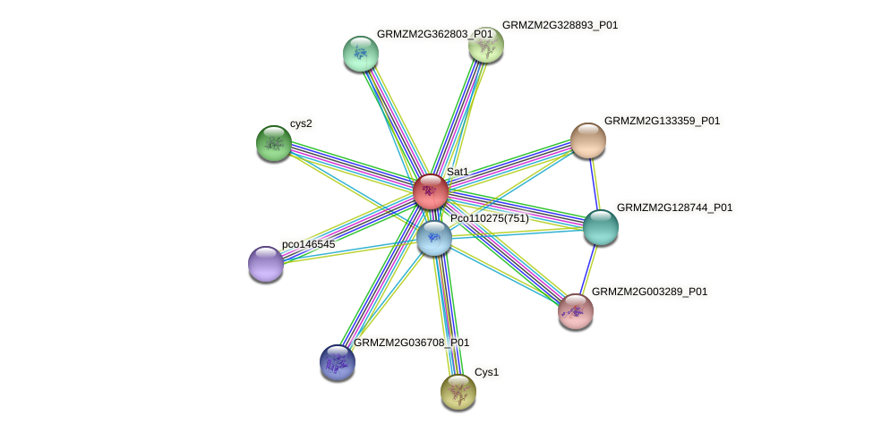 Zm.4401 protein (Zea mays) - STRING interaction network
