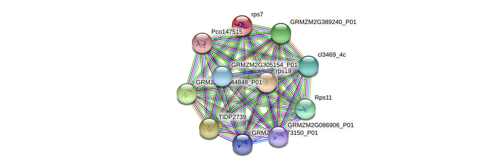 rps7 protein (Zea mays) - STRING interaction network