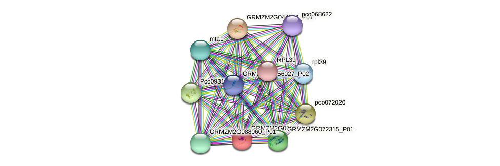 GRMZM2G069594_P02 protein (Zea mays) - STRING interaction network