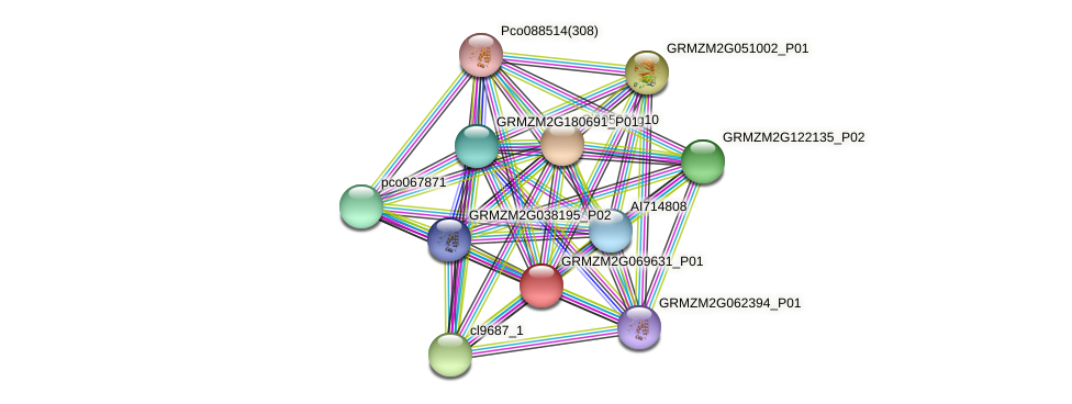 GRMZM2G069631_P01 protein (Zea mays) - STRING interaction network