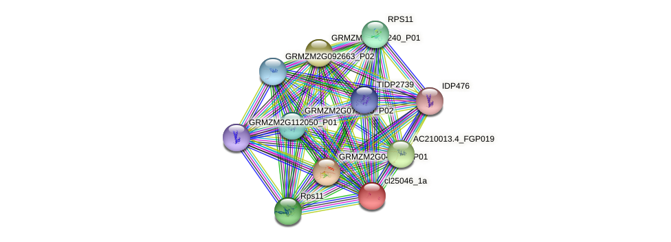 cl25046_1a protein (Zea mays) - STRING interaction network