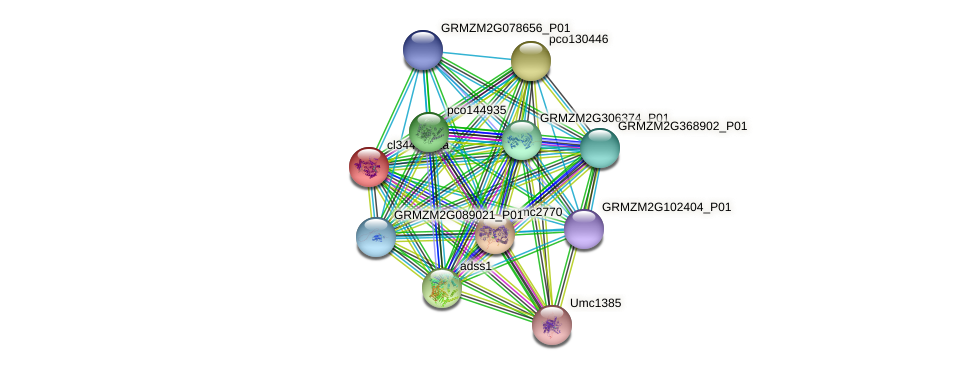 cl34483_1a protein (Zea mays) - STRING interaction network
