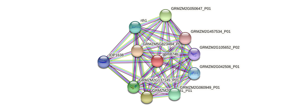 gpm874b protein (Zea mays) - STRING interaction network