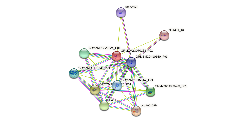 GRMZM2G070163_P01 protein (Zea mays) - STRING interaction network