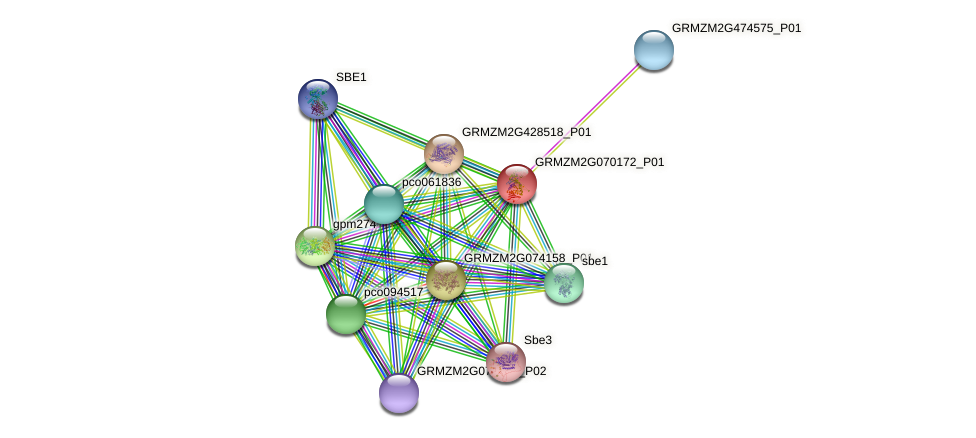 GRMZM2G070172_P01 protein (Zea mays) - STRING interaction network