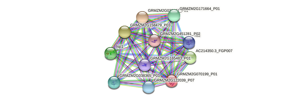 GRMZM2G070199_P01 protein (Zea mays) - STRING interaction network
