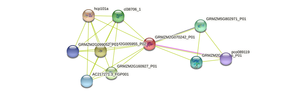 GRMZM2G070242_P01 protein (Zea mays) - STRING interaction network