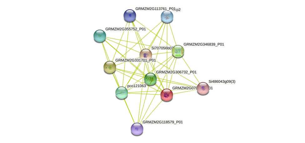 GRMZM2G070252_P01 protein (Zea mays) - STRING interaction network