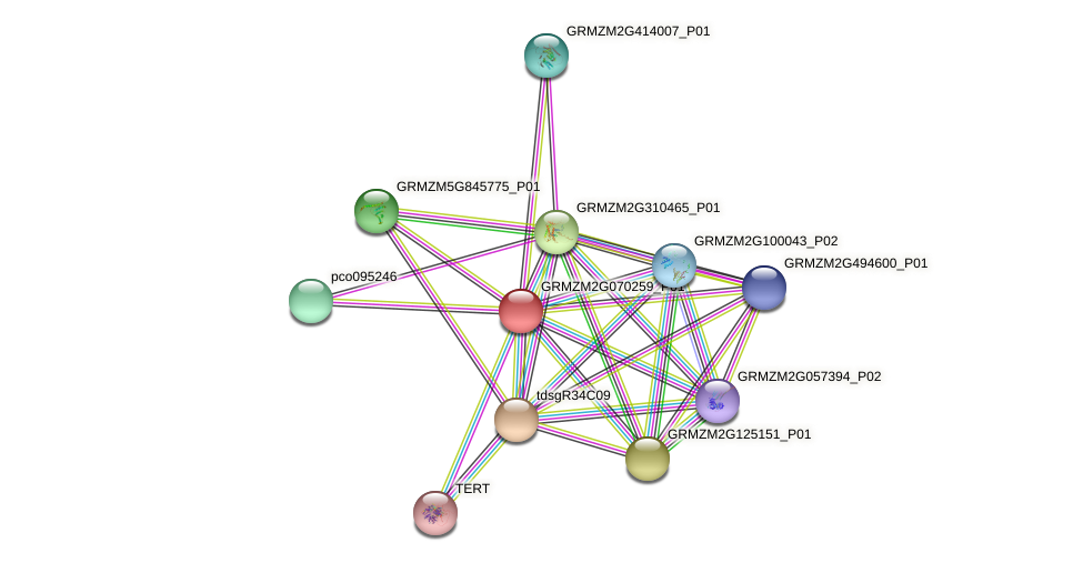 GRMZM2G070259_P01 protein (Zea mays) - STRING interaction network