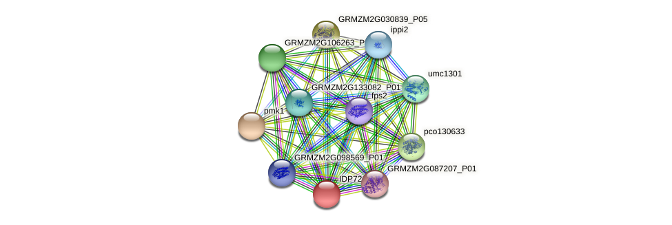 IDP726 protein (Zea mays) - STRING interaction network