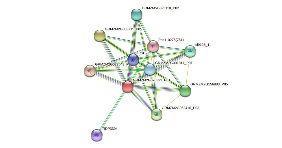 GRMZM2G070392_P01 protein (Zea mays) - STRING interaction network