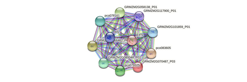 Zm.14056 protein (Zea mays) - STRING interaction network