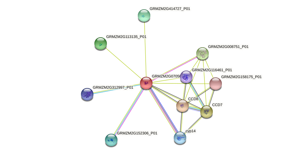 Zm.85577 protein (Zea mays) - STRING interaction network