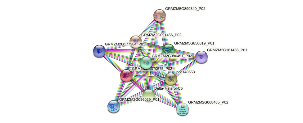 GRMZM2G070575_P02 protein (Zea mays) - STRING interaction network