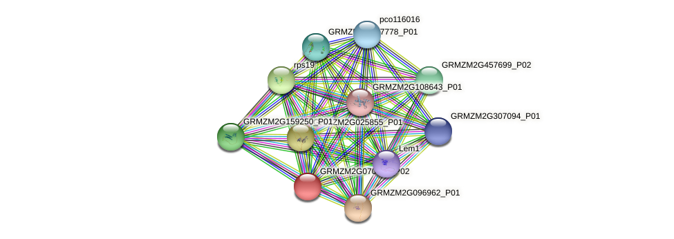 GRMZM2G070723_P02 protein (Zea mays) - STRING interaction network