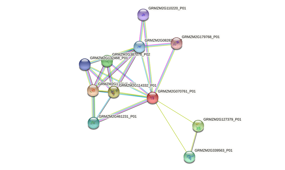 GRMZM2G070761_P01 protein (Zea mays) - STRING interaction network