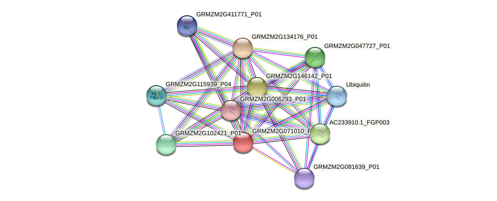 Zm.33522 protein (Zea mays) - STRING interaction network
