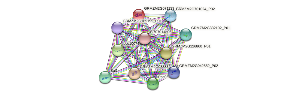 GRMZM2G071133_P01 protein (Zea mays) - STRING interaction network