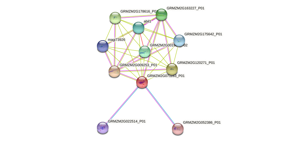 GRMZM2G071163_P01 protein (Zea mays) - STRING interaction network