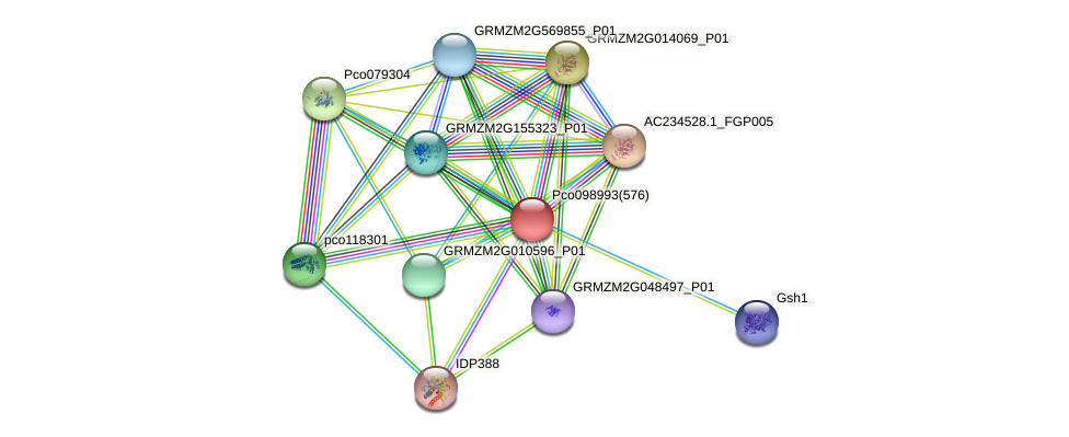 GRMZM2G071208_P01 protein (Zea mays) - STRING interaction network