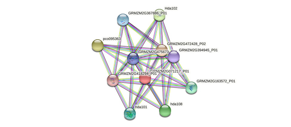GRMZM2G071217_P01 protein (Zea mays) - STRING interaction network