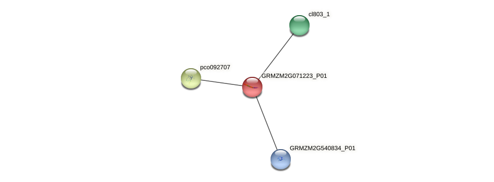 GRMZM2G071223_P01 protein (Zea mays) - STRING interaction network