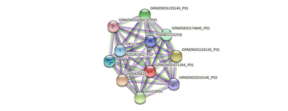 Zm.139812 protein (Zea mays) - STRING interaction network