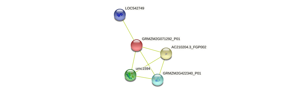 GRMZM2G071292_P01 protein (Zea mays) - STRING interaction network