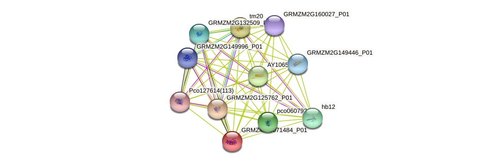 Zm.152842 protein (Zea mays) - STRING interaction network