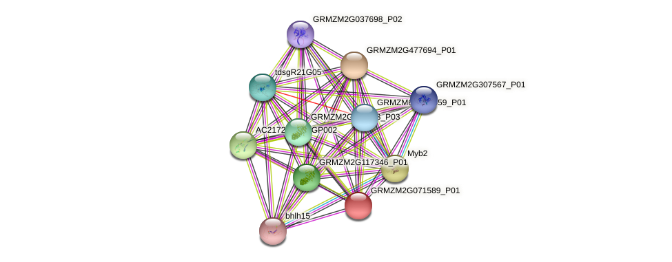 GRMZM2G071589_P01 protein (Zea mays) - STRING interaction network