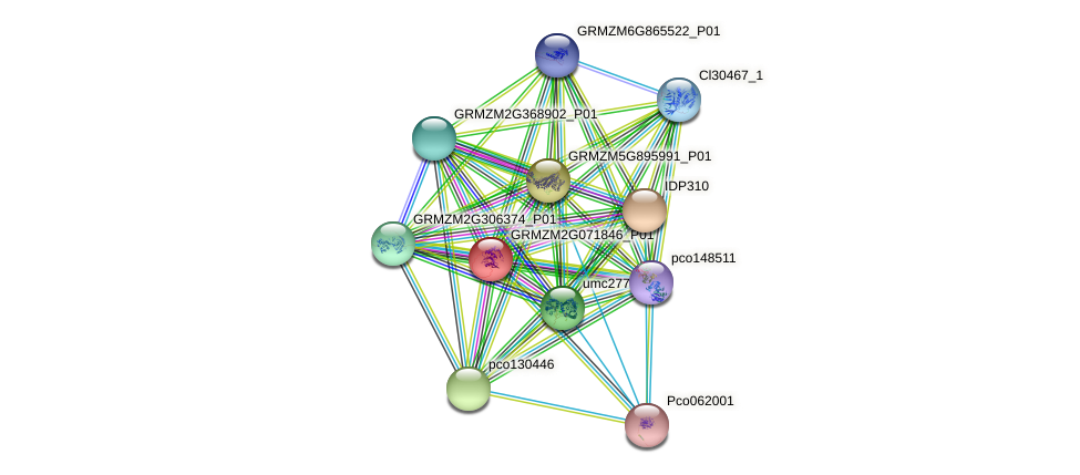 GRMZM2G071846_P01 protein (Zea mays) - STRING interaction network