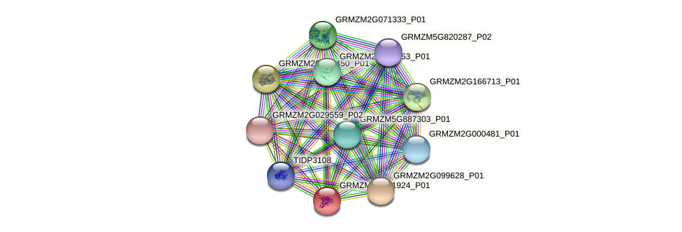 GRMZM2G071924_P01 protein (Zea mays) - STRING interaction network