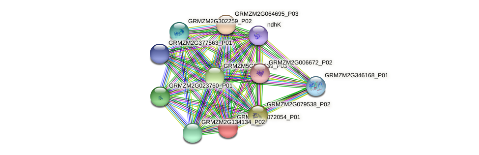 GRMZM2G072054_P01 protein (Zea mays) - STRING interaction network