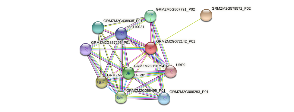 GRMZM2G072142_P01 protein (Zea mays) - STRING interaction network